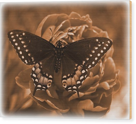 Antique Butterfly Wood Print by Diane Reed