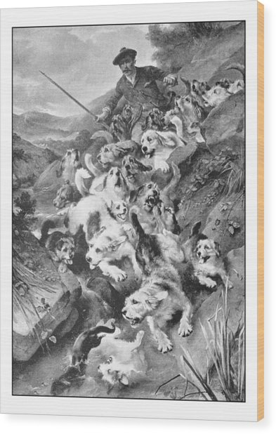 Antique Photo Of Paintings: Bolting The Otter Wood Print by Ilbusca