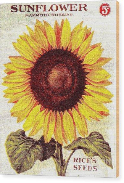 Antique Sunflower Seeds Pack Wood Print