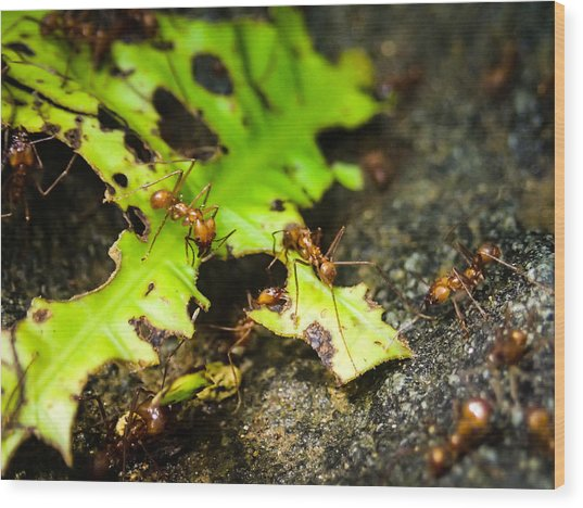 Ants At Work Wood Print