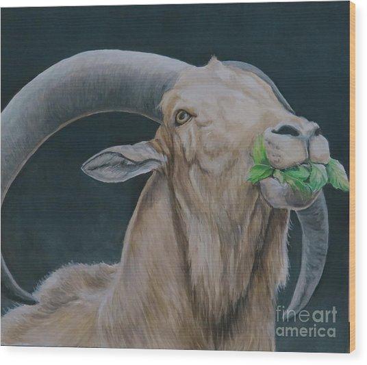 Aoudad Sheep Wood Print by Charlotte Yealey