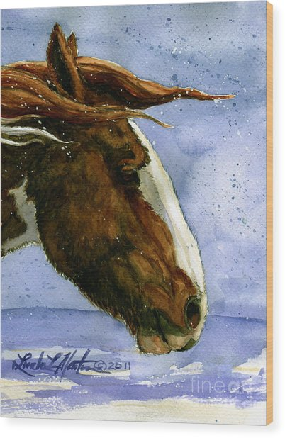 Apache Bachelor Stallion Of Sand Wash Basin Wood Print