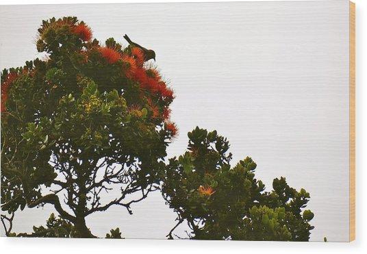 Apapane Atop An Orange Ohia Lehua Tree  Wood Print