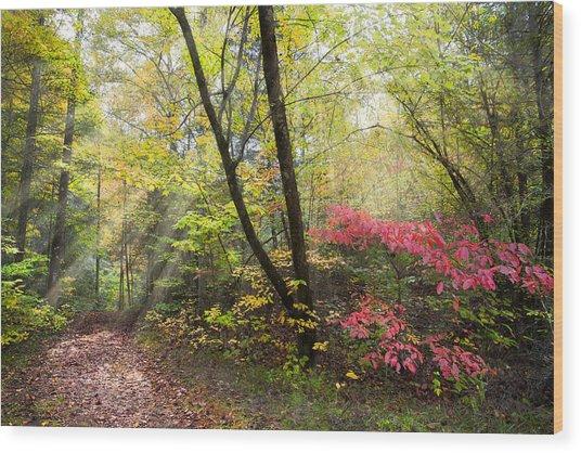 Appalachian Mountain Trail Wood Print
