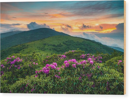 North Carolina Appalachian Trail Roan Mountain Highlands Wood Print