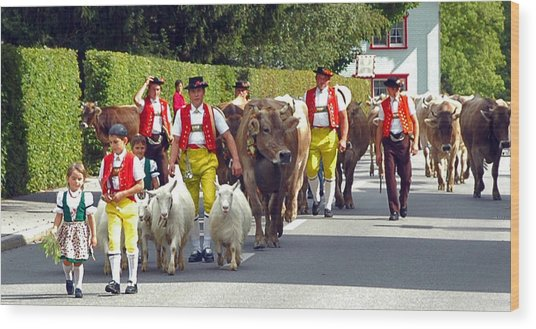 Appenzell Parade Of Cows Wood Print