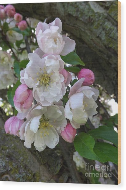 Apple Blossom Bouquet Wood Print