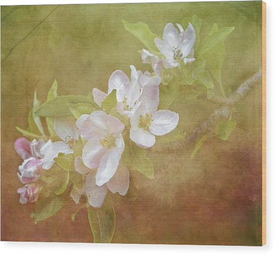 Apple Blossom Spring Wood Print