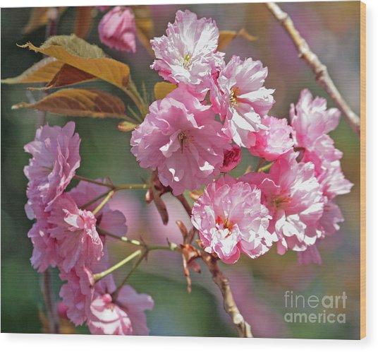 Apple Tree Blossoms Wood Print by Kenny Bosak