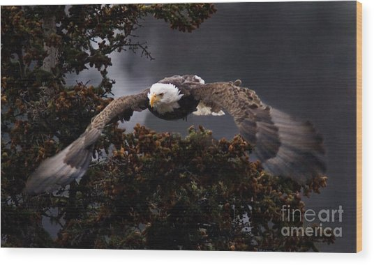 Approaching Eagle-signed- Wood Print