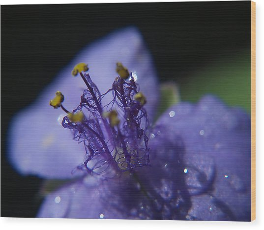 April Showers Wood Print