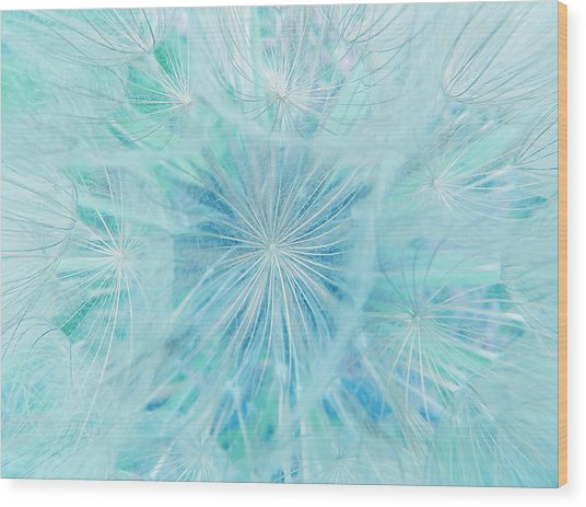 Aqua Salsify Wood Print