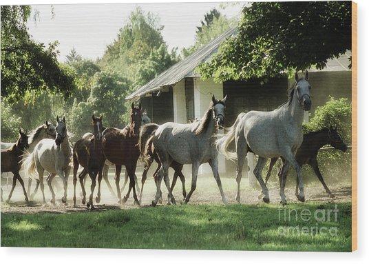 Arabian Horses Wood Print by Angel Ciesniarska