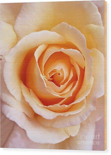 Aranciata Rose Blossom Wood Print