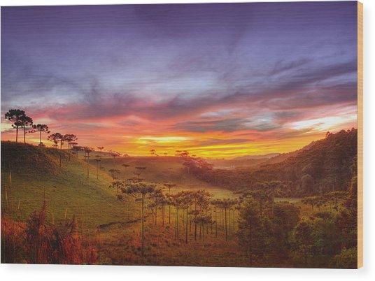 Araucaria Vale Wood Print by Miguel Santos