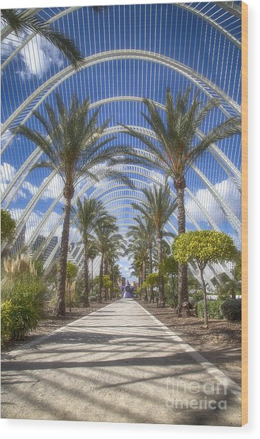 Arche With Palmtrees Wood Print
