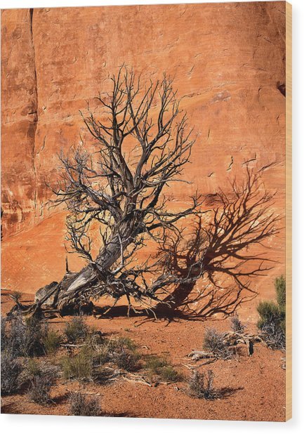 Arches Tree Wood Print