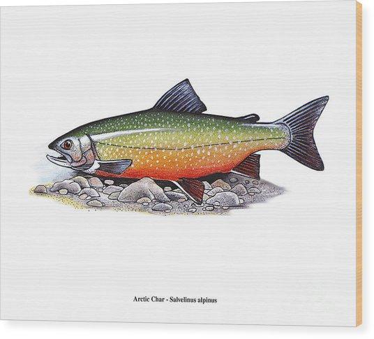 Arctic Char Male Wood Print