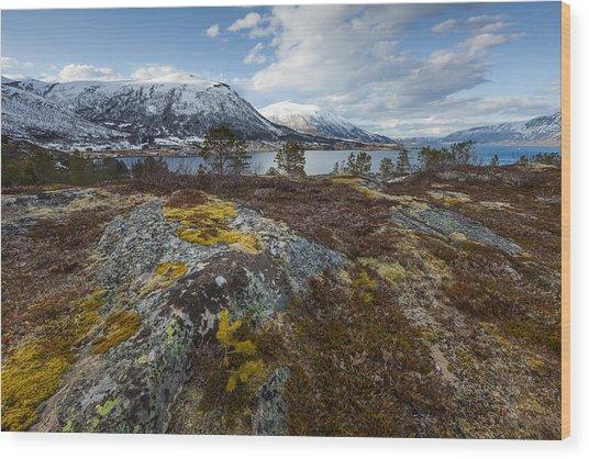 Arctic Lichen Wood Print