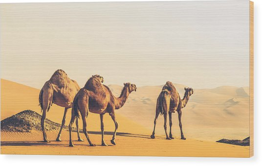Are We Lost  Wood Print by Ahmed Rashed