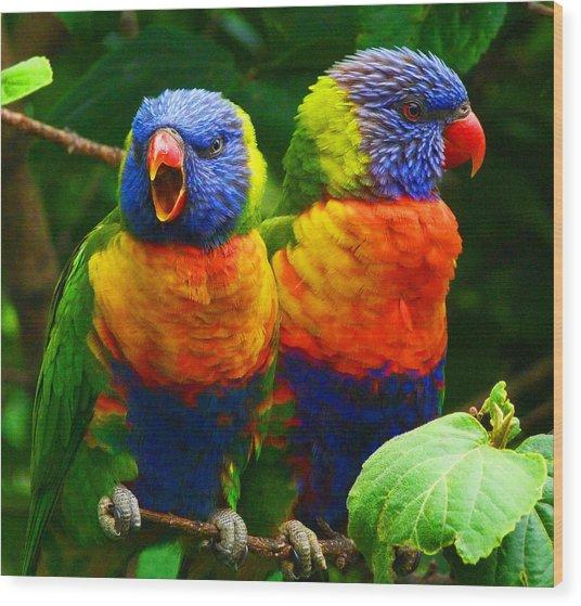 Are You Listening - Rainbow Lorikeets Wood Print