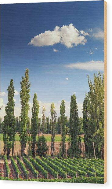 Argentina, Mendoza, Wineries Wood Print by Michele Falzone