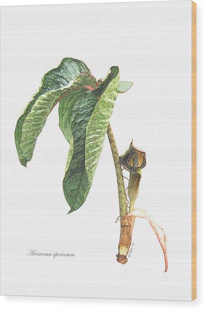 Arisaema Speciosum Wood Print