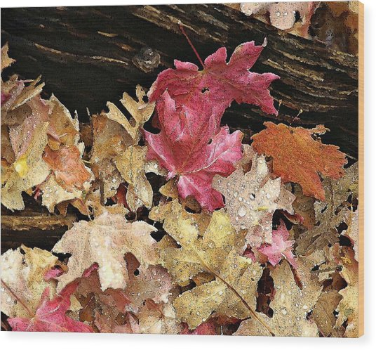 Arizona Fall Colors Wood Print