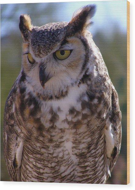 Arizona Owl Visit  Wood Print