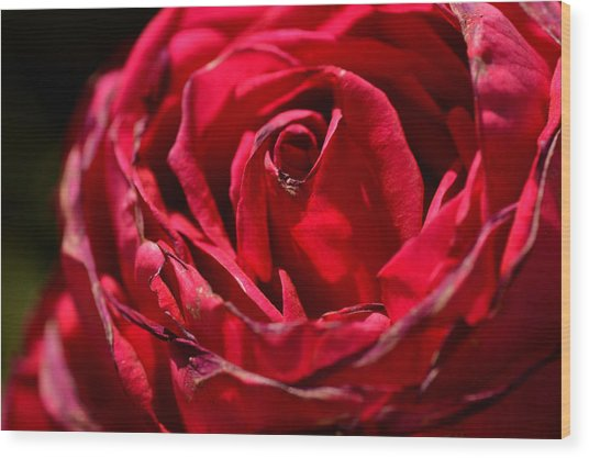 Arizona Rose I Wood Print