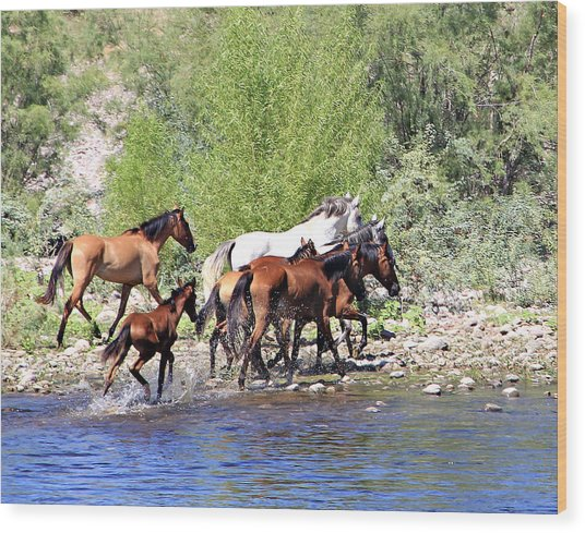 Arizona Wild Horse Family Wood Print