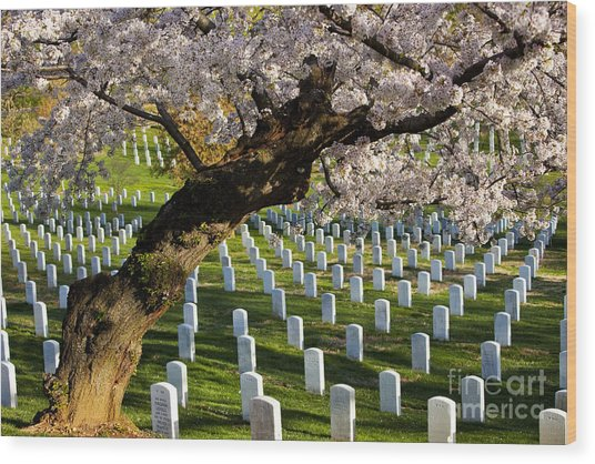 Arlington National Cemetary Wood Print