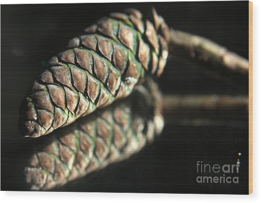Armored Pine Cone Wood Print