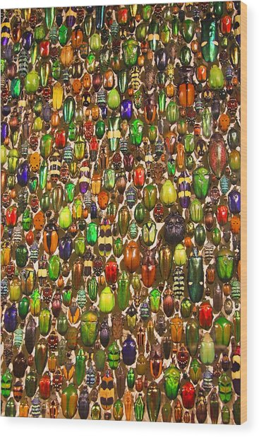 Army Of Beetles And Bugs Wood Print