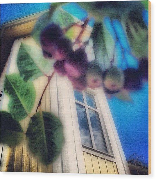 #aronia #buske #trädgård #hus #hem Wood Print