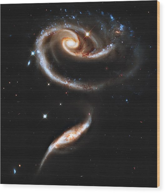 Arp 273 Rose Galaxies Wood Print