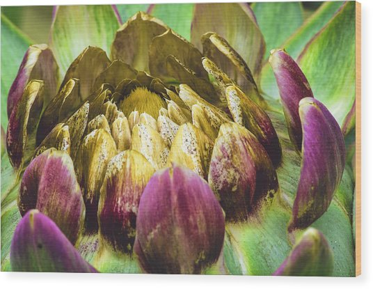 Artichoke Bloom Wood Print