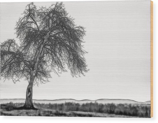 Artistic Black And White Sunset Tree Wood Print