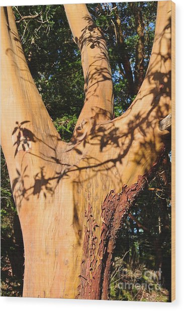 Arbutus - Shadows From Above Wood Print