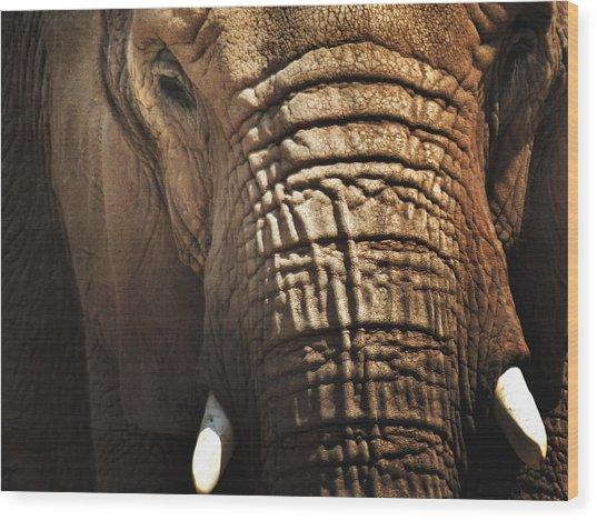 As High As An Elephant's Eye Wood Print by Susan Desmore