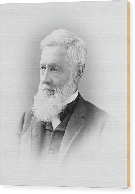 Asa Gray Wood Print by American Philosophical Society
