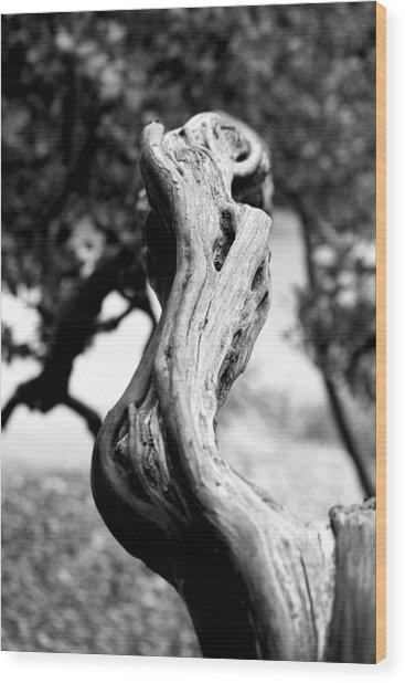Ascending Branch Wood Print by Luna Curran