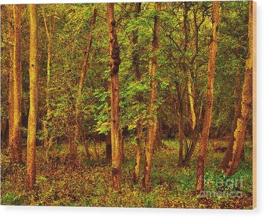 Ash Trees Wood Print