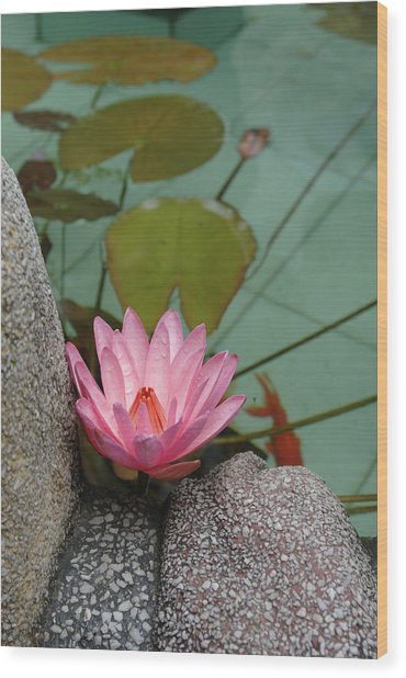 Asia, Vietnam Water Lily In A Temple Wood Print