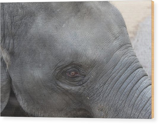 Asian Elephant Face Wood Print by Colin Smeaton