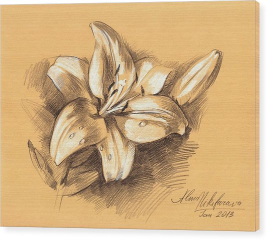 Asiatic Lily Flower With Bud Sketch Wood Print
