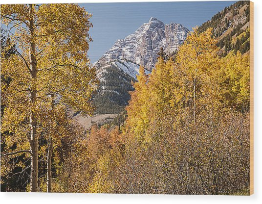 Aspen And Mountains 5 Wood Print