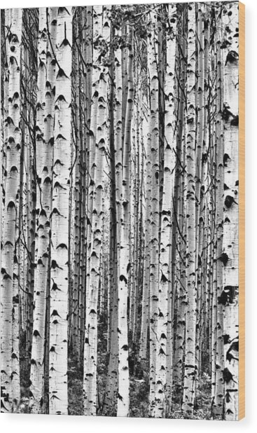 Aspen Boles Wood Print