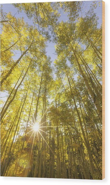 Aspen Day Dreams Wood Print