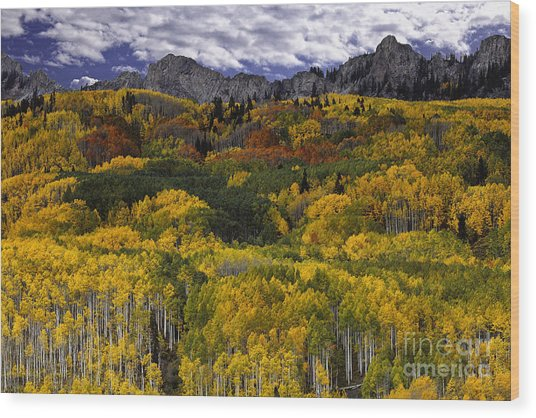 Aspen Fantasy Wood Print